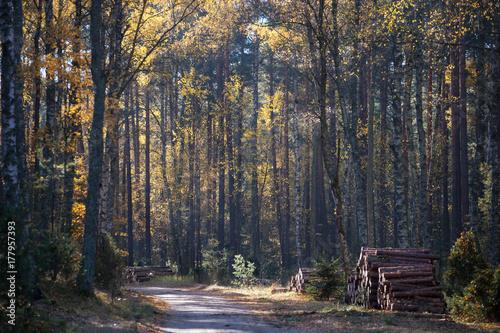 Droga w jesiennym lesie - 177957393