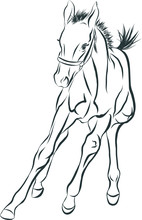 A Sketch Of A Merry Foal.