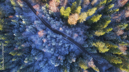 Autumnal aerial view of forest and road