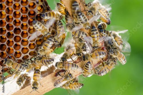 Recess Fitting Bee pszczoły na plastrze miodu w pasiece