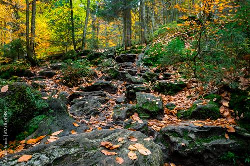 Plakat Kamienie z liści w jesiennym lesie bawarskim