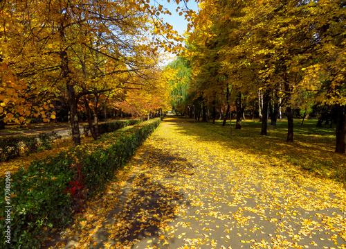 Foto op Canvas Herfst Golden autumn alley
