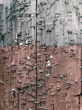 Close Up Of  Metal Staples On Telephone Pole