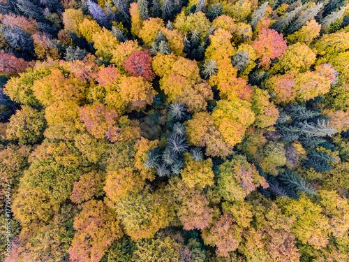 Zdjęcie XXL Widok z lotu ptaka las jesienią