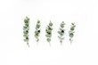 Leinwanddruck Bild - green leaves eucalyptus on white background. flat lay, top view