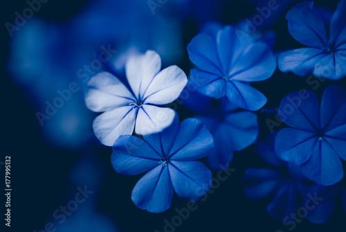 Fototapeta  nocturna azul