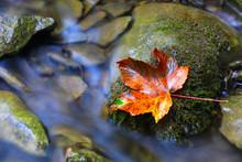 Autumn Leaf On Stone Near Brook