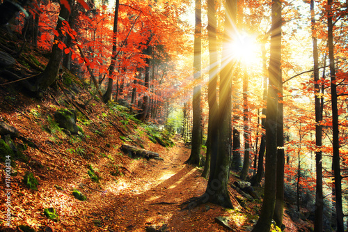 Obraz Goldener Herbst - fototapety do salonu
