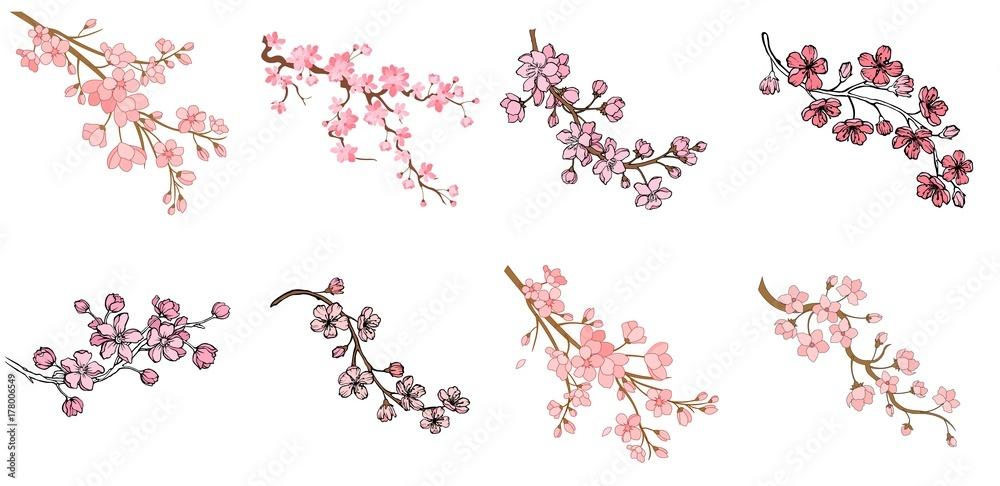 Fototapeta Set of branch of sakura with flowers and leaves on white background. Cherry blossom spring design. Vector illustration.