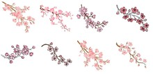 Set Of Branch Of Sakura With F...