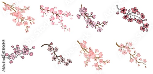 Tela Set of branch of sakura with flowers and leaves on white background