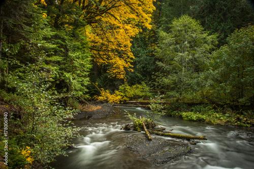 Zdjęcie XXL Klon drzewo jesienią