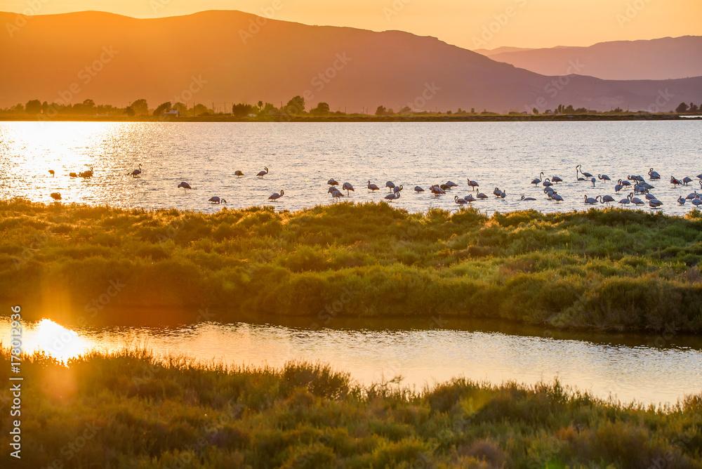 Flamingos in Ebro Delta nature park, Tarragona, Catalunya, Spain. Copy space for text.