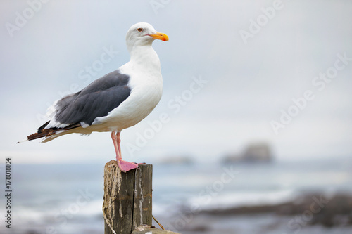 Fotomural Seagull sitting on a post