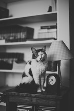 Cat Sitting On Cabinet Looks Straight At The Camera And Winks