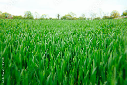 Keuken foto achterwand Groene Grass in a meadow