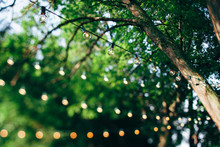 String Lights On A Tree In Summer