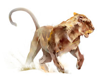 Colored Sketch Isolated Running Animal Lioness.