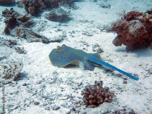 Poster Sous-marin Unterwasser Ägypten