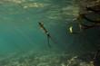 Photo sous-marine d'un calamar