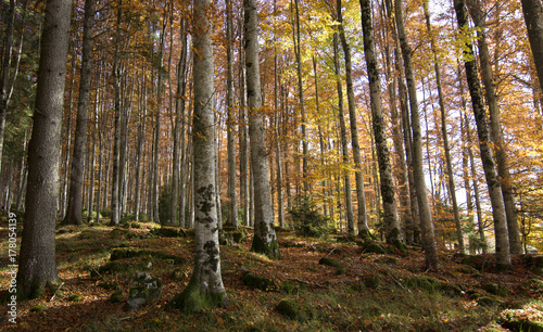 Spoed Foto op Canvas Grijze traf. Autumn colors in the forest