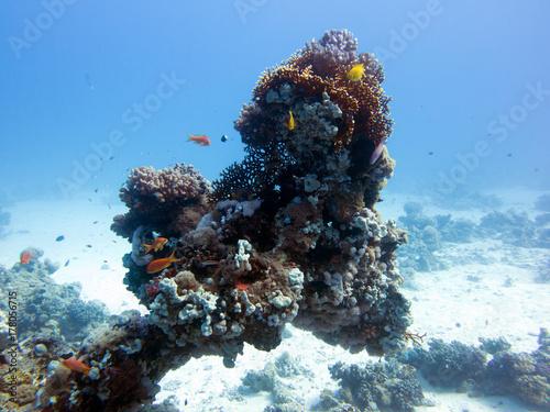 Obraz na dibondzie (fotoboard) Podwodny Egipt