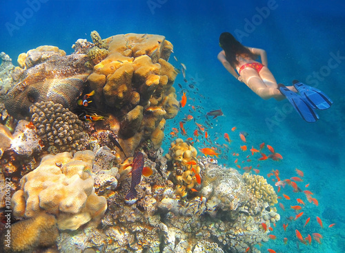 girl swims underwater amid the coral and colorful tropical fish in Red Sea, Eilat, Israel