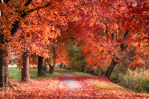 very nice autumn forest Wallpaper Mural