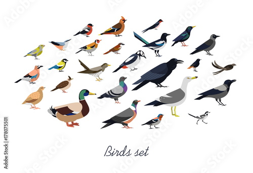 Collection of city synanthrope and wild forest birds drawn in flat geometric style, side view. Set of colorful cartoon animals isolated on white background. Colored ornithological vector illustration.