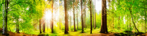 In de dag Bomen Beautiful forest panorama with big trees and bright sun