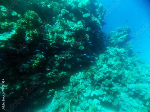 Obraz na dibondzie (fotoboard) prawdziwe zdjęcie, prawdziwy kolor z podwodnego. Morze Czerwone