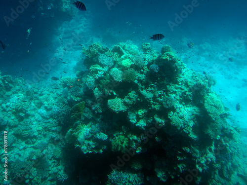 Plakat prawdziwe zdjęcie, prawdziwy kolor z podwodnego. Morze Czerwone