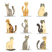 Collection Of Different Cats Breeds, Cute Pet Animal Vector Illustrations