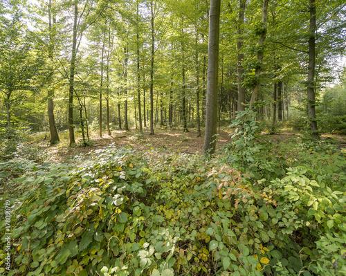 Papiers peints Forets idyllic forest scenery