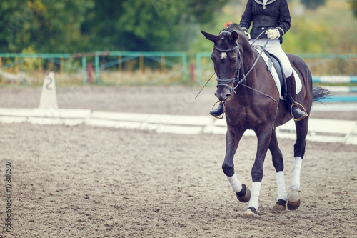 La pose en embrasure Equitation Raven horse with rider girl walking on dressage competition. Image with copy space