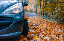 Tire In Autumn Leaves