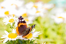 Nice Butterfly With Orange And White Spots On Wings