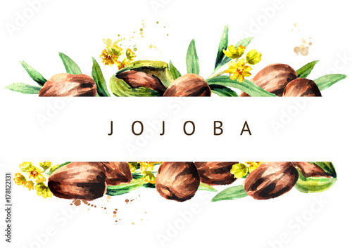 Jojoba nuts and green leaves background. Watercolor  illustration Canvas-taulu