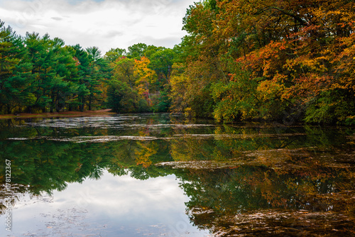 Fotografie, Obraz  Lake Surrounded by Colorful Trees