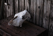 Animal Skull Watches Over Abandoned Town