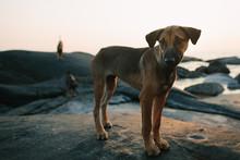 Cute Alert Little Dog On A Roc...