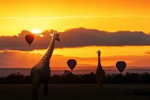 Giraffe Walking Into Sunrise In Africa