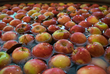 Apples Waiting To Be Cider