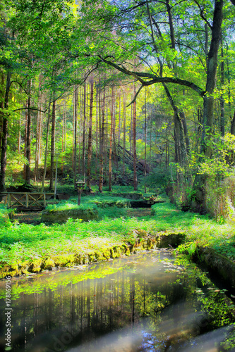 Wall Murals Forest Magical autumn forest with lake and beautiful trees.