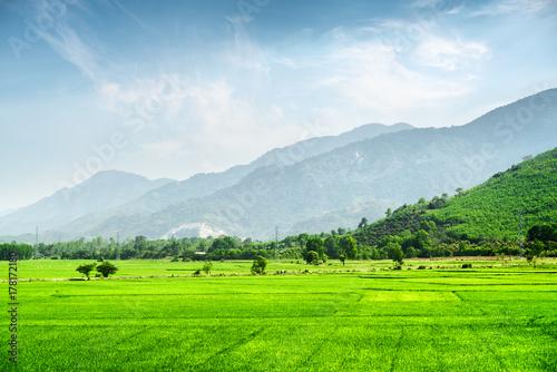 Poster Lime groen Bright green rice fields. Beautiful summer landscape