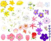 Set Of Flowers Of Different Colors On White Background