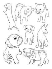 Dog Line Art, Vector, Illustra...