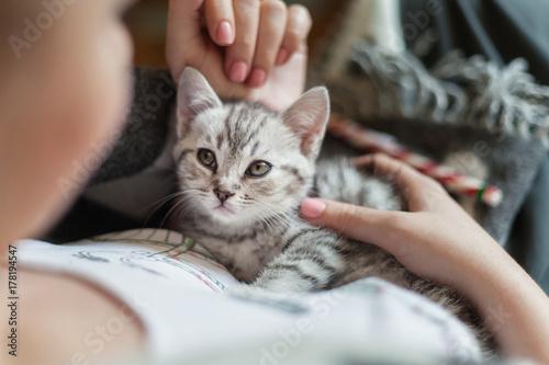 Fotografie, Obraz  Small gray kitten