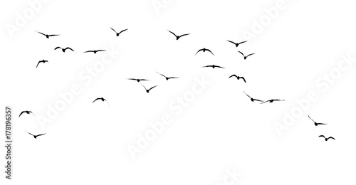silhouette of a flock of birds on a white background Canvas Print