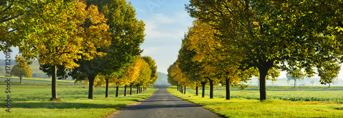 Canvas Print Avenue of Linden Trees in Autumn
